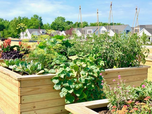 Epcon Communities_Exterior_Community Garden